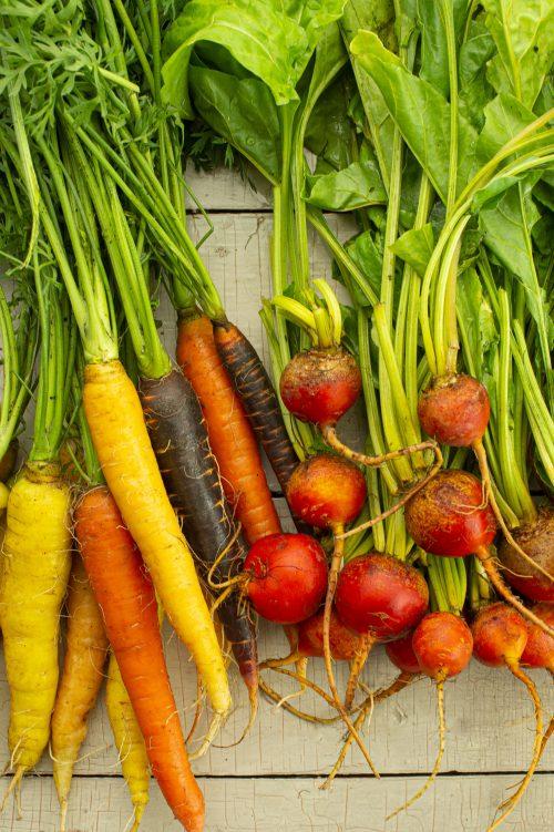 Orge aux légumes racines